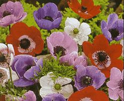 Anemones Botanical Tours